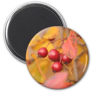 Herbst-Beerenmagnet Runder Magnet 5,7 Cm