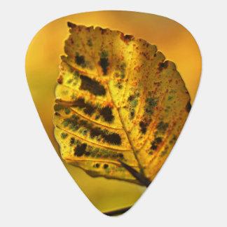 Herbst-Blatt, das mit Farbe birst Plektron