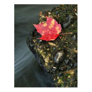 Herbst-Blatt Postkarte