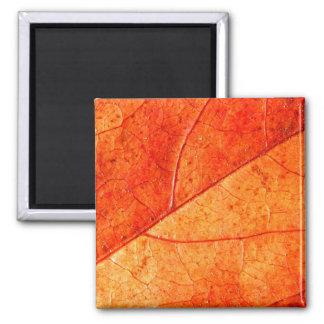 Herbst-Blatt-Quadrat-Magnet Quadratischer Magnet
