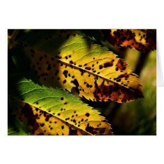 Herbst-Blätter, das Farbfall Notecards ändert Karte