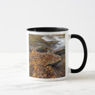 Herbst-Blätter entlang schauendes Glas-Nebenfluss Tasse