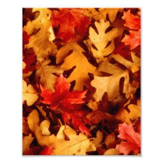 Herbst-Blätter - Fall-Farbe Fotodruck
