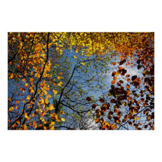 Herbst-Blätter gegen einen blauen Himmel Poster