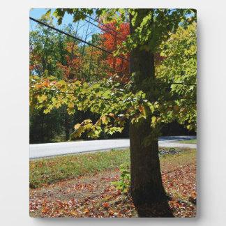Herbst-Blätter in Maine Fotoplatte