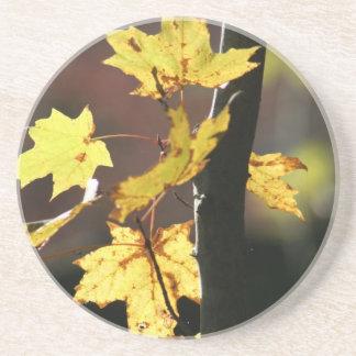 Herbst-Blätter Untersetzer