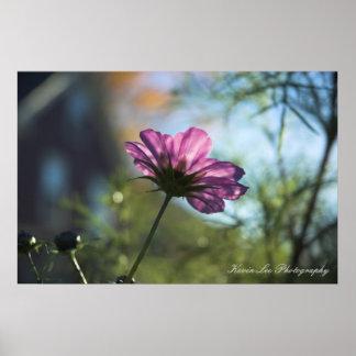 Herbst-Blume Poster