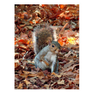 Herbst-Eichhörnchen Postkarte