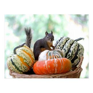 Herbst-Eichhörnchen Postkarten