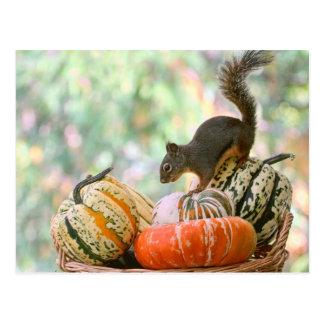 Herbst-Ernte-Eichhörnchen