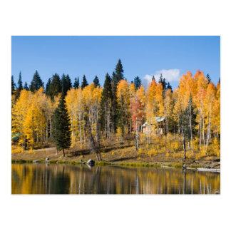 Herbst-Espen an den Gletscher-Frühlingen Postkarte