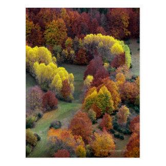 Herbst-Farben Postkarte