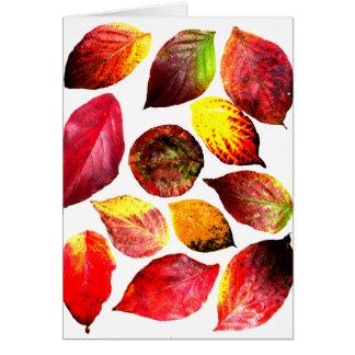 Herbst färbt Blatt-Anzeige Karte