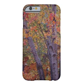 Herbst färbt Telefon-Kasten Barely There iPhone 6 Hülle