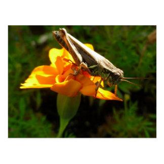 Herbst-Hopfen-Postkarte Postkarte