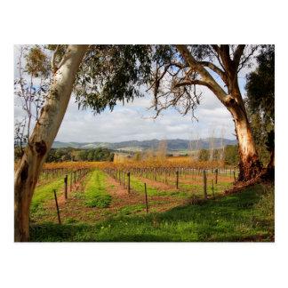 Herbst im Barossa Valley Südaustralien Postkarte