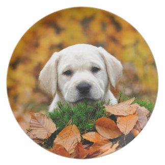 Herbst Labrador Teller