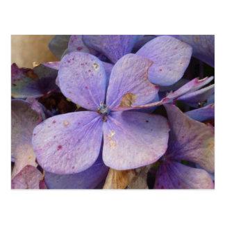 Herbst - Postkarte (Hortensia)