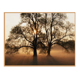 Herbst-Postkarte Postkarten
