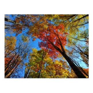 Herbst-Pracht Postkarte