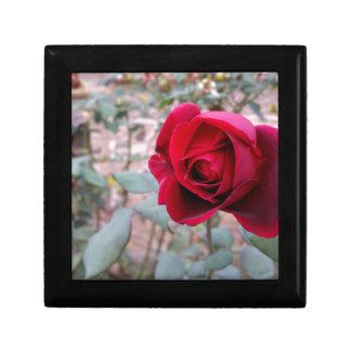 Herbst-Rote Rose Geschenkbox