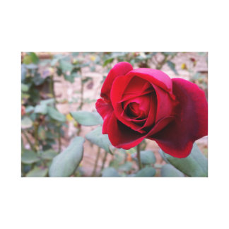 Herbst-Rote Rose Leinwanddruck