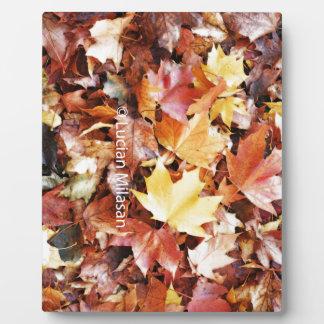 Herbst-Soul Fotoplatte