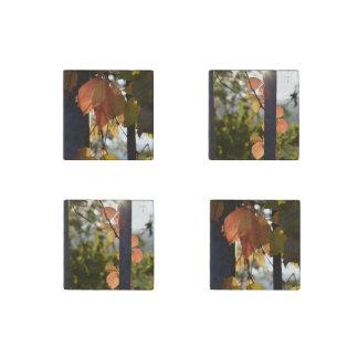 Herbst verlässt Sammlung Stein-Magnet