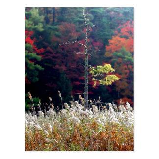 Herbst-Vielzahl Postkarte