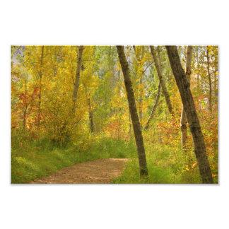 Herbst-Waldland Fotodruck
