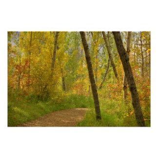 Herbst-Waldland Poster
