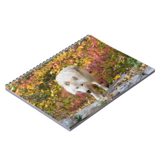 Herbst-Wolf Spiral Notizblock