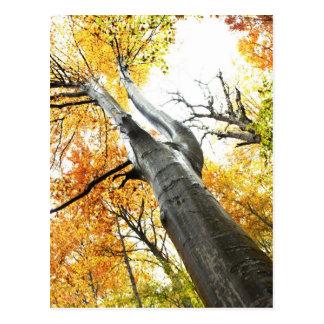 Herbstbaum Postkarte
