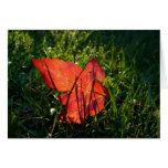 Herbstblatt im Sonnenlicht Grußkarte
