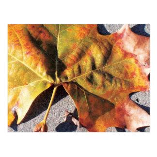 Herbstblatt Postkarte