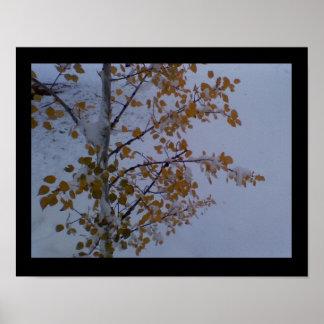 Herbstespen-Blätter des Goldes, in einer Wiese des Poster