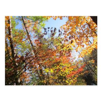 Herbstexplosion Postkarte