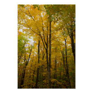 Herbstfarbe, Michigan Poster