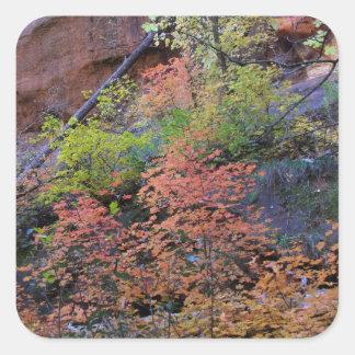 Herbstfarben ganz herum quadratischer aufkleber