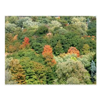 Herbstfarben: HOHER PARK Toronto Postkarte
