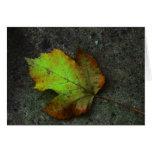 Herbstgruss Grußkarten