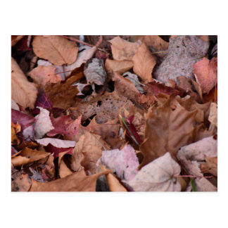 Herbstlaub im Smokies Postkarte