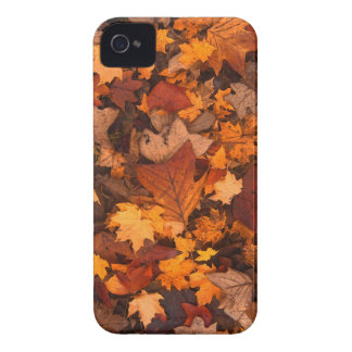 Herbstlaub iPhone 4 Case-Mate Hülle