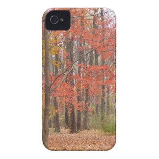Herbstlaub iPhone 4 Hülle