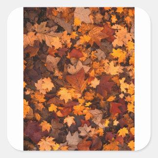 Herbstlaub Quadratischer Aufkleber