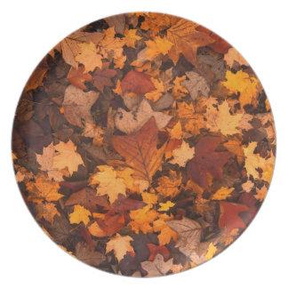 Herbstlaub Teller