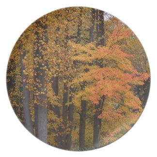 Herbstlaub-Tulpe-Pappel-Baum-Abendessen-Teller Melaminteller