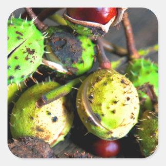 Herbstliches Stillleben mit Kastanien Quadratischer Aufkleber