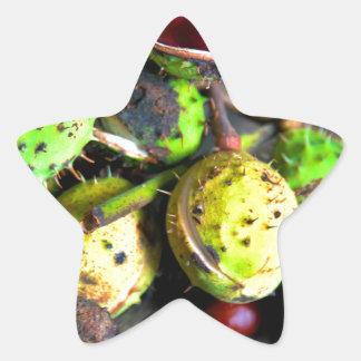 Herbstliches Stillleben mit Kastanien Stern-Aufkleber
