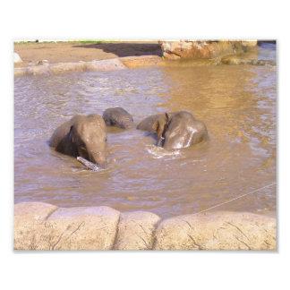 Herde der Elefanten Kunst Photo